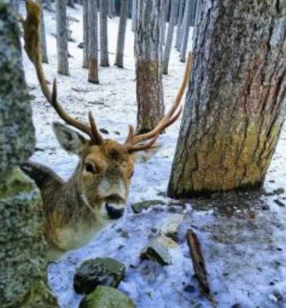 Il parco nazionale della Sila: la biodiversità animale
