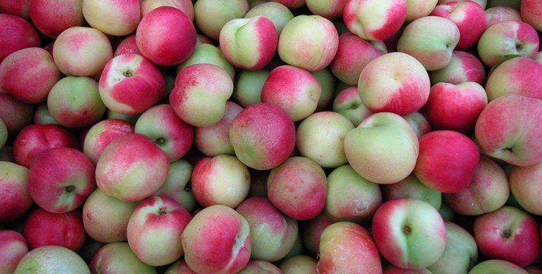 La merendella: frutto calabrese